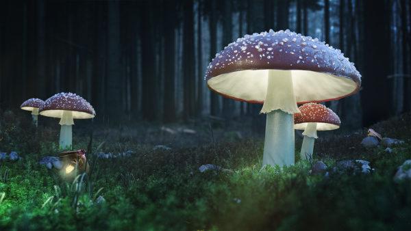 mushroom_glow_web_final